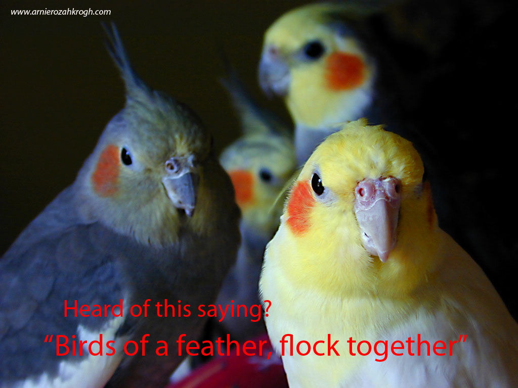 """birds of a feather flock together My mother once wrote a poem about a flock of geese and simply stated, why they fly together and it reminded me of the saying, """"birds of a feather, flock together"""" birds of a feather, flock together:."""